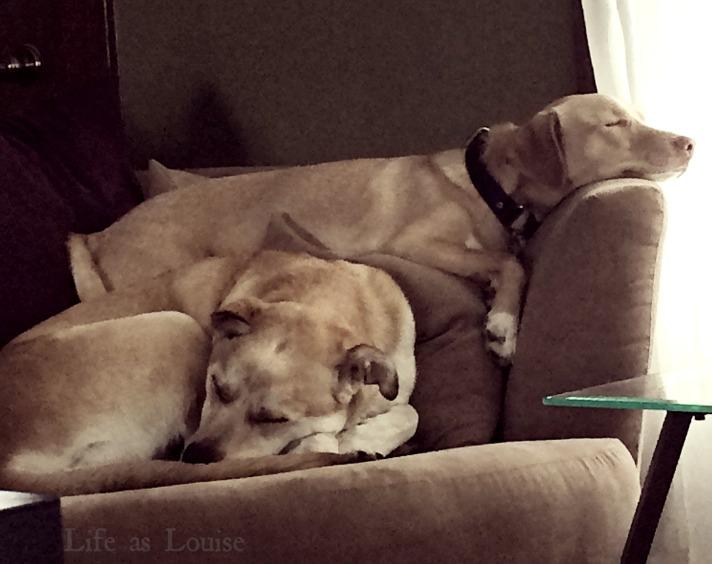dog_ownership_5